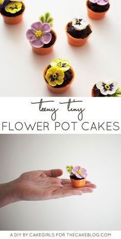 Learn how to make these tiny flower pot cakes in seven simple steps. No baking required! A cake project with a step-by-step tutorial. Created by Cakegirls Flower Pot Cake, Flower Pots, Flower Cakes, Mini Desserts, Beautiful Cakes, Amazing Cakes, Mini Cakes, Cupcake Cakes, Cake Blog
