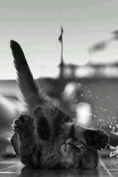 break-dancing kitty!