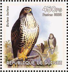 Common Buzzard stamps