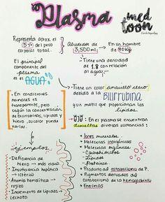 Histología Medicine Notes, Medicine Student, Rn School, School Notes, Nursing Tips, Nursing Notes, Mental Map, Medical Anatomy, Med Student