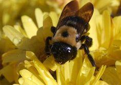 Mamiweb.de - Hausmittel gegen Bienenstiche