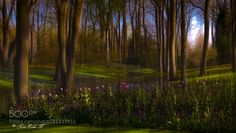 Spring by toreeideh #landscape #travel