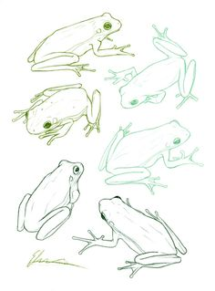 edemoss: Some refined sketches of green tree frogs that like to...