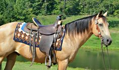 Horses draft horse colorful pictures of draught horses horse breeds g