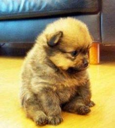 HE'S SO CHUBBY!!! Omg, I need this dog <3