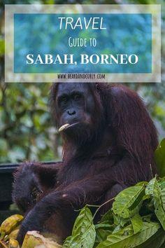 Travel Guide to Sabah, Borneo: Top Places Kuala Lumpur, Travel Deals, Travel Guide, Travel Advice, Borneo Travel, Penang, Semporna, Kota Kinabalu, Exotic Beaches