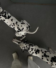 kylie francis - x Puppy Names, Dog Names, Cute Puppies, Cute Dogs, Dog Quotes, Dog Treats, Animal Photography, Puppy Love, Giraffe