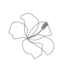 Line Art Flowers, Flower Line Drawings, Line Flower, Line Drawing Art, Flower Art, Flower Vector Art, Drawing Style, Flower Outline, Outline Art