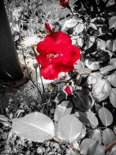 "Photo ""unrossoimbarazzante"" by claybass"