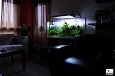 Aquascape in a living room Shot by Aquaceed. Pin by Aqua Poolkoh