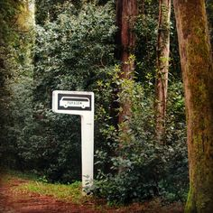 #buçaco #bussaco #portugal #natureandart #travel #heritage #nature #garden #thermalwaters