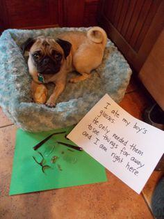 Pug shaming.  This scenario sounds familiar...