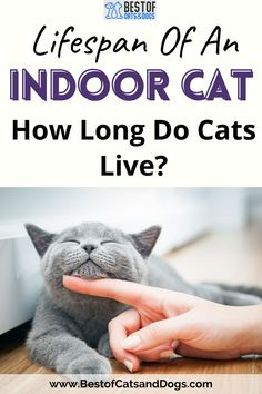 Lifespan Of An Indoor Cat. Cats May Not Really Have Nine Lives, But Factors Such As Diet, Healthcare And Environment Can Have An Impact On How Long A Cat Can Live. Read More Here! #CatCare #CatLife #CatLifespan #LifespanOfCats