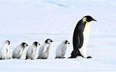 Nalezený obrázek pro Fauna Antarctica