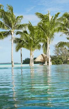 Palm fringe pool at Four Seasons Bora Bora | Luxury Bora Bora Honeymoons