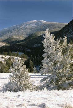 ✯ Frosted Pines - Eagles Nest, New Mexico (somewhere to go during a winter weekend trip)