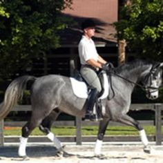 Kindergarten Exercises to Learn the Aids | Dressage Today
