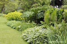 Galeria zdjęć - Mchy i paprocie czyli bajkowy ogród - Ogrodowisko