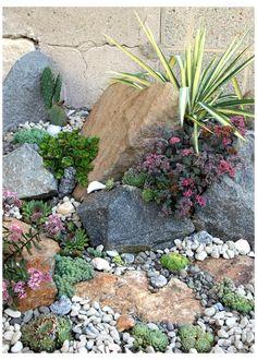 Succulent Rock Garden, Succulent Landscaping, Succulent Gardening, Landscaping With Rocks, Succulents Garden, Backyard Landscaping, Plants For Rock Garden, Rock Garden Art, Black Rock Landscaping