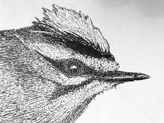 Detail Goudhaan 2017 Owl, Fine Art, Bird, Detail, Illustration, Animals, Animaux, Owls, Birds