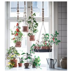 15 IKEA hacks for the plants in your life. 15 IKEA hacks for the plants in your life. Window Plants, Potted Plants, Garden Plants, Plants Indoor, Plant Pots, Herb Garden, Outdoor Plants, Shade Plants, Air Plants