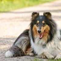 #dogalize Perché comprare e come compilare una medaglietta per cani #dogs #cats #pets