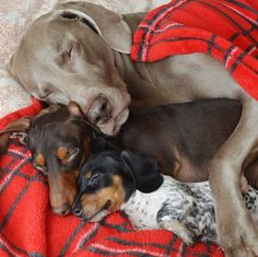 Harlow and Indiana and Reese