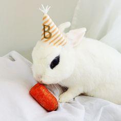 brody napoléon's 4th birthday