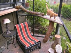 """A catio, an outdoor cat enclosure or """"cat patio,"""" is the purrfect solution to solve the indoor/outdoor dilemma and keep your cat safe, healthy and happy. Cage Chat, Outdoor Cat Enclosure, Dog Spaces, Living With Cats, Cat Run, Cat Playground, Outdoor Cats, Outdoor Play, Space Cat"""