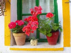 Geraniums are easy to winter inside and do well the following summer...