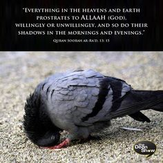 Qur'an ar-R'ad (The Thunder) 13:15: And unto Allah (Alone) falls in prostration whoever is in the heavens and the earth, willingly or unwillingly, and so do their shadows in the mornings and in the afternoons. http://www.dawntravels.com/