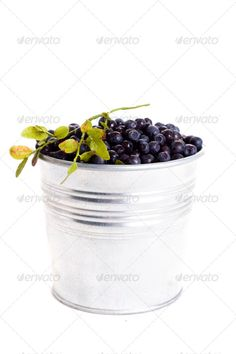 DOWNLOAD :: https://hardcast.de/article-itmid-1003594164i.html ... blueberry in bucket ...  berry, bilberry, black, blue, blueberry, delicious, food, fresh, fruit, green, group, healthy, heap, juicy, plant, ripe, sweet, wild  ... Templates, Textures, Stock Photography, Creative Design, Infographics, Vectors, Print, Webdesign, Web Elements, Graphics, Wordpress Themes, eCommerce ... DOWNLOAD :: https://hardcast.de/article-itmid-1003594164i.html