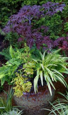 container gardening, maple, fern