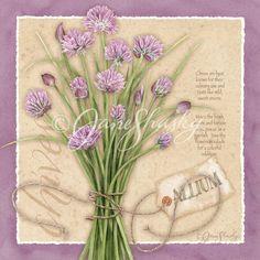 Herbs | Jane Shasky