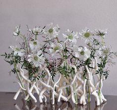 """scabiosa japonica """"alba"""", pink Jasmine, morus latitalia"""