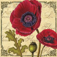 Coquelicot by Marie-Elaine Cusson