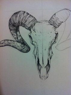 Pen drawing of a ram skull
