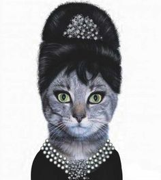 dogs and cats dressed like celebrities
