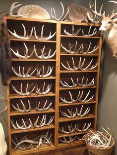 Shed Antler Adjustable Shelving for antler display in trophy room The Effective Pictures We Offer Yo Deer Hunting Decor, Deer Decor, Antler Crafts, Antler Art, Man Cave Diy, Man Cave Home Bar, Classy Man Cave, Ultimate Man Cave, Trophy Rooms