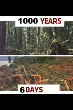 The environment benefits from people's actions to protect it, and the more we all do the longer our planet can continue to thrive. One of the most important things we can all do is live a more sustainable lifestyle. Save Planet Earth, Save Our Earth, Our Planet, Save The Planet, Angst Quotes, Save Mother Earth, Environmentalist, Environmental Issues, Environmental Pollution