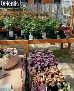 Plants, Roses, Spaces, Nature, Naturaleza, Pink, Rose, Planters, Nature Illustration