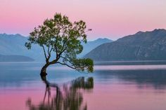 Rose Quartz and Serenity lake, sky, and mountains.  New Zealand.  Sunrise At The Wanaka Tree Photo by Cat Burton -- National Geographic Your Shot