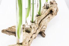 Treibholz plus Reagenzgläser = DIY Vase                              …