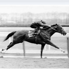 Secretariat. The best ever. I will never forget watching him capture the Triple Crown.