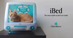 iBed, uma cama de gato ligada às redes sociais – Parte 1 de 2 The lucky owner of this bed is Nestum, he is 10 months old and is a friendly yellow cat. The iBed is a cat bed made from an iMac tha…