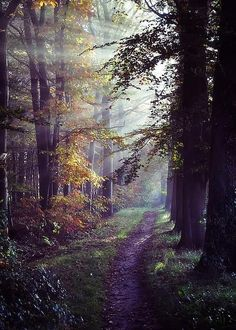 ~~Autumn Paradise | crepuscular rays in a misty forest, Tennessee |  by Mountain Dreams~~