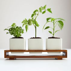 Culinary salsa growing kit - RedEnvelope, awesome idea for growing Herbs at home! Wooden Planters, Planter Boxes, House Plants Decor, Plant Decor, Garden Soil, Herb Garden, Gardening, Gentle Facial Cleanser, Grow Kit