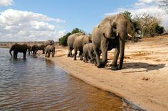 Botswana offers one of the best wildlife safaris in Africa. A Botswana Safari will delight all safari goers, from the crystal waters of the Okavango Delta to the dry pans of the Kalahari.