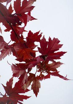 Herbstlicher Ideenbaum gegen Langeweile