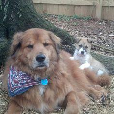 Harry & foster pup Amelia.